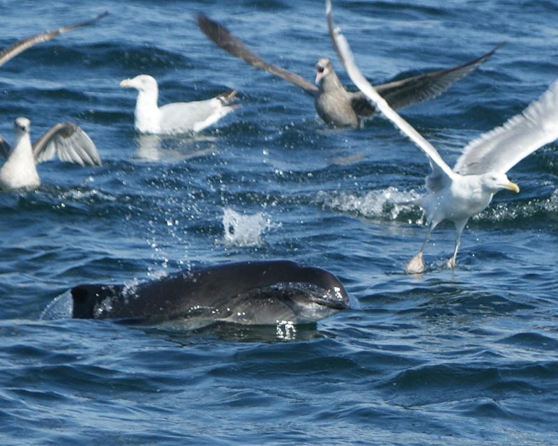海上观鲸Aventura